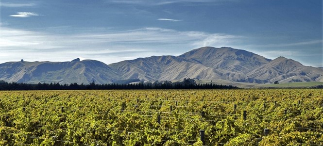 Wine-Trail-Wairarapa.jpg